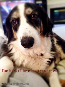 a dog's expression of love