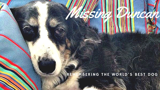 Missing Duncan: Remembering the World's Best Dog