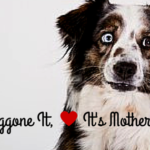 Doggone it, It's Mother's Day